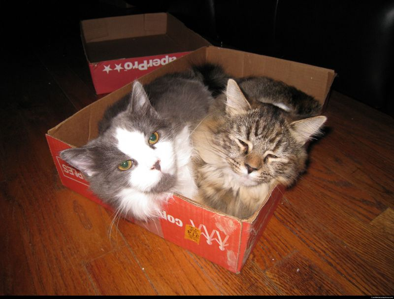 Kitty box 2