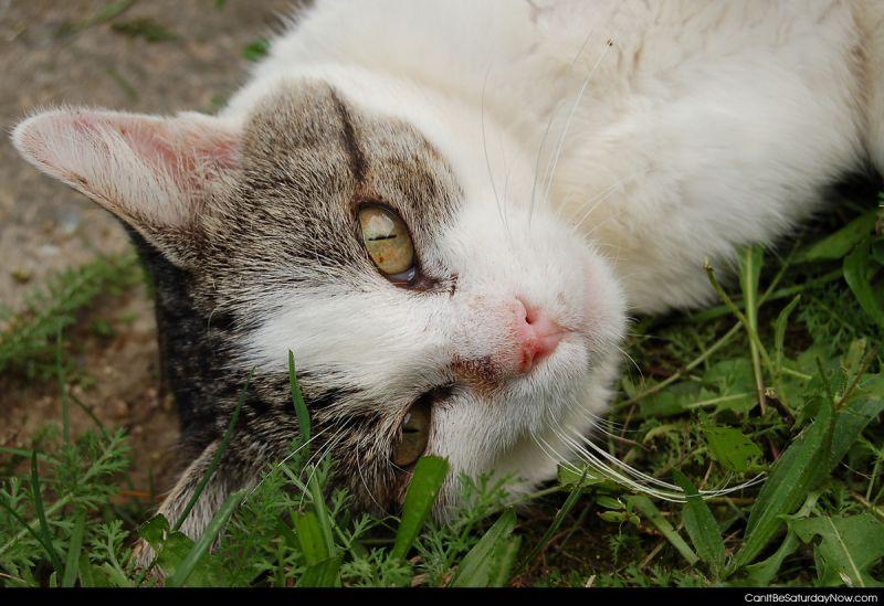 Chill kitty 2
