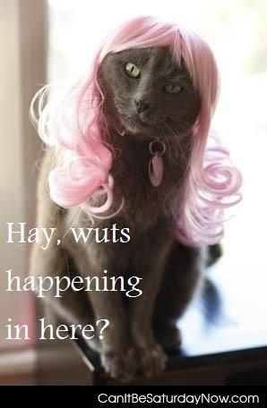 Kitty wigg