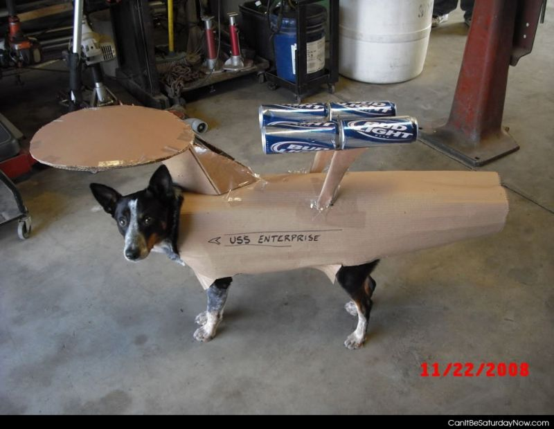 Dog enterprise