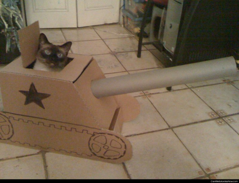 Cat tank