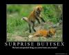 Buttsex fox
