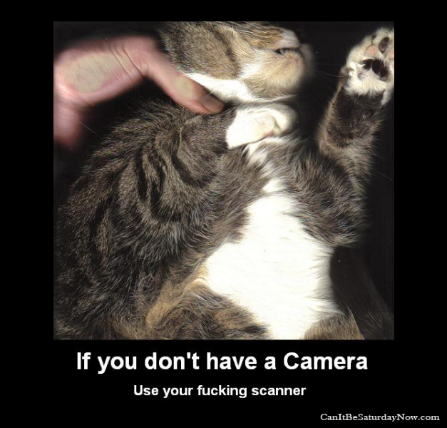 Scan cat