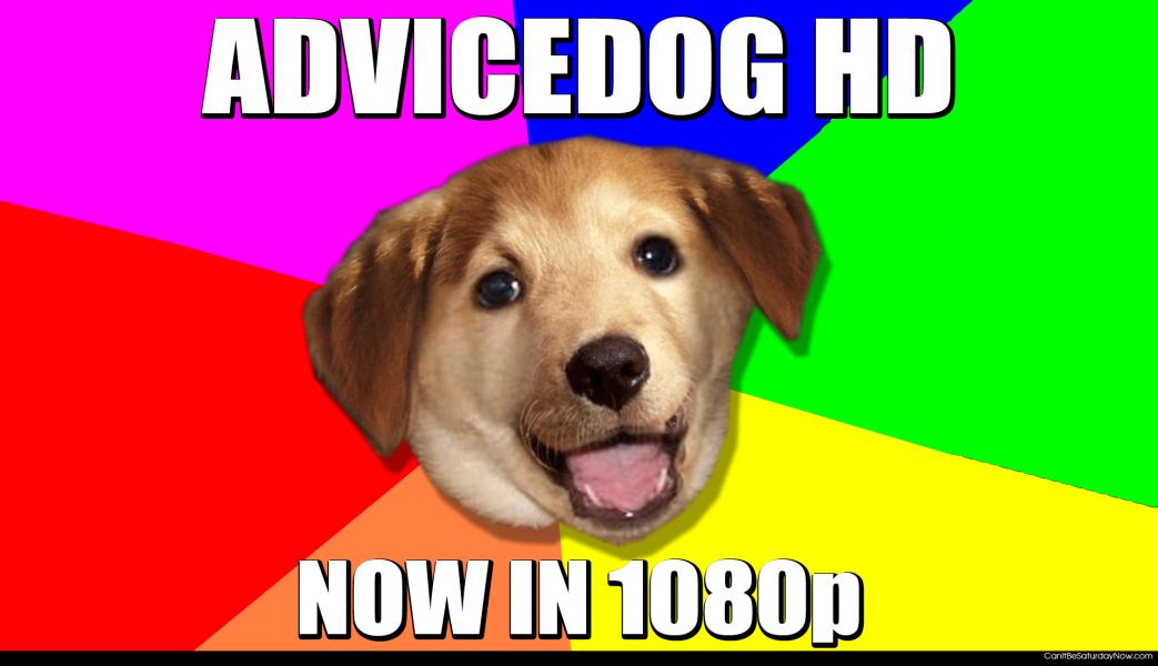 Advice dog in hd