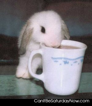 Bunny thirsty
