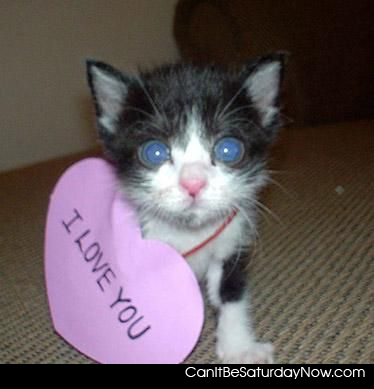 kitty loves you