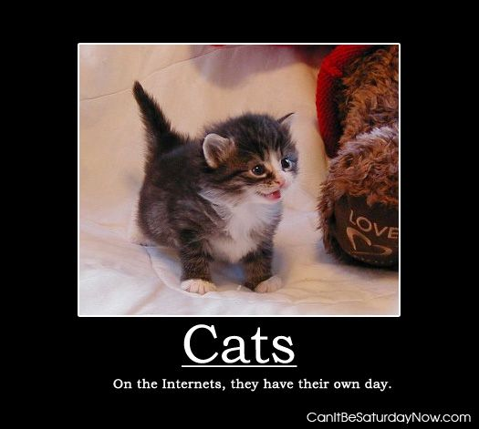 Cats get one day
