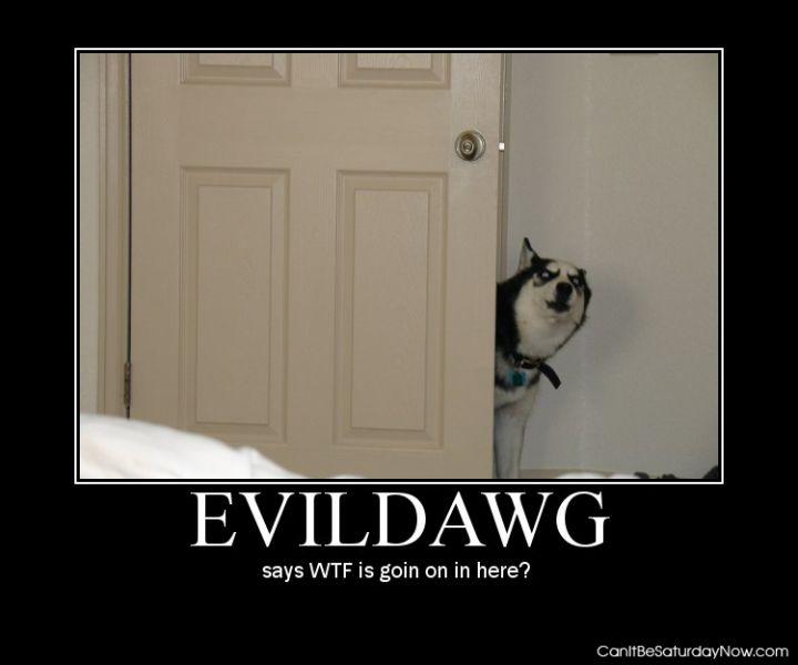 Evil dawg