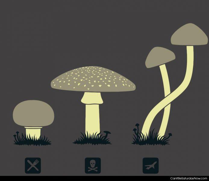 Which mushroom