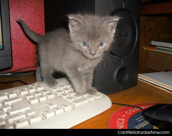 Tiny kitty
